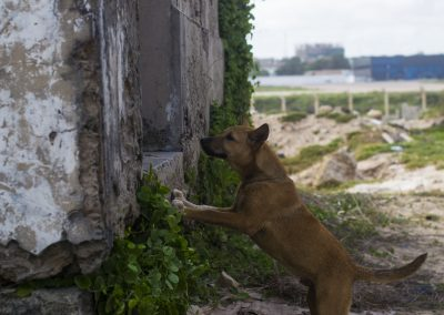A dog peers into a war-torn compound